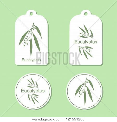 Silhouette of Eucalyptus with leaves.  Medicinal plant. Healthy lifestyle. Vector  Illustration. Hea