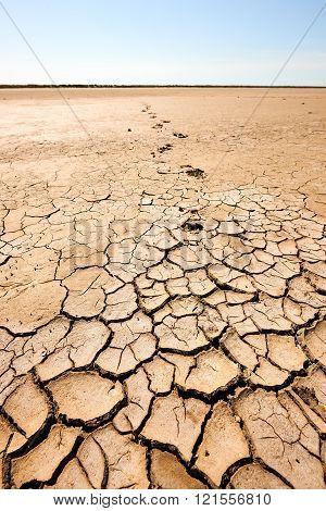 Arid And Waste Land