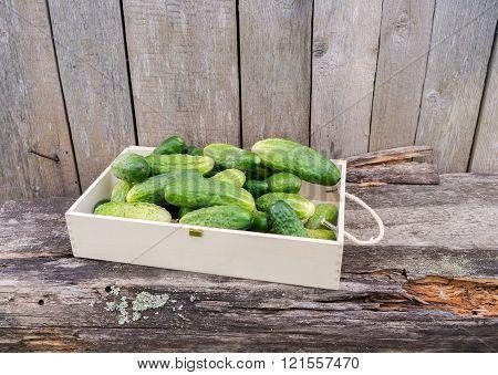 Fresh eco cucumbers in wooden box