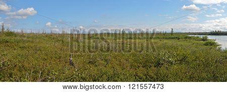 Panorama of the East Siberian tundra. The summer tundra landscape in the area of the Putorana plateau.