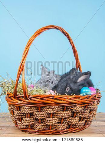 two rabbits in wicker basket