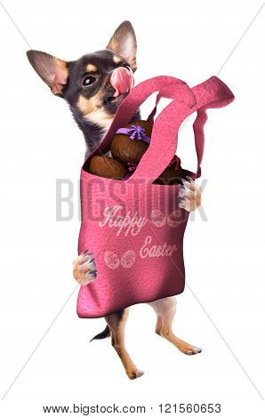 Cute Dog Chihuahua Have A Bag With Chocolate Easter Eggs Between Legs,isolated