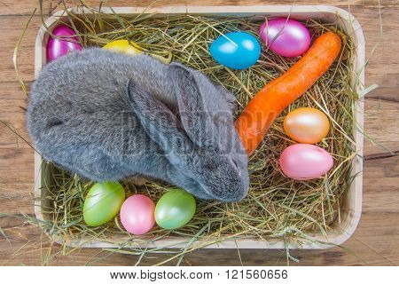 rabbit in wooden cuvette