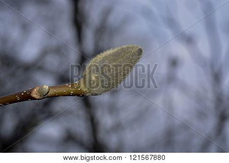 Spring awakening trees