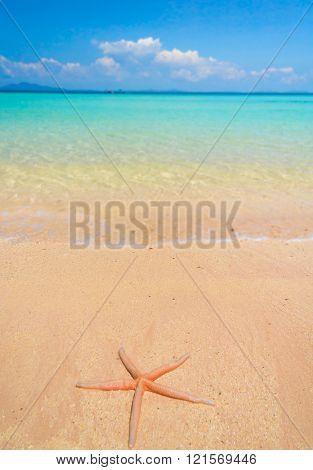 Natural Details Sea Starlet