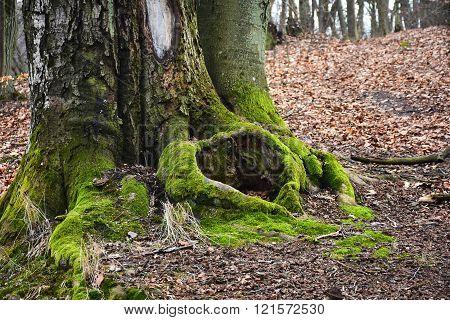 Nature,around me,beautiful, wild, unpredictable woods un Poland