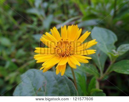 fotografia mostrando a beleza de uma pequena flor no campo