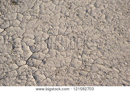 Dryed Soil