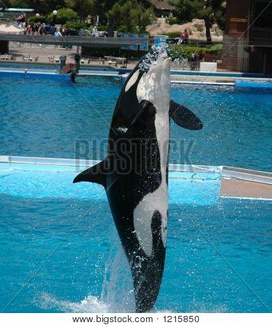 Rendimiento de la ballena