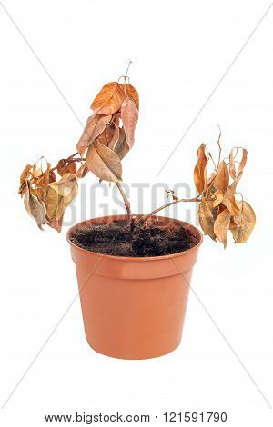 One Dead Plant In Pot