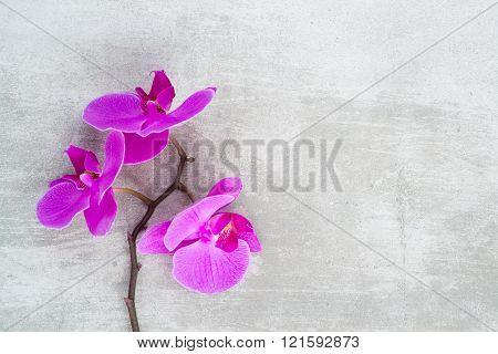 Purple Orchid Branch