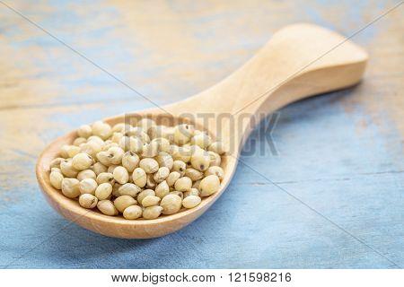 sorghum grain on a wooden spoon against blue painted grunge wood
