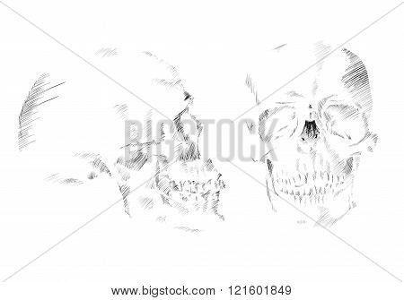 Abstract Skull Drawn In Monochrome In Hatching-style. Vector Illustration Skull