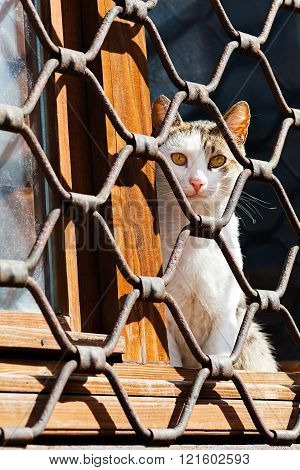 Cat On The Window With Iron Fence