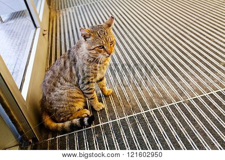 Cat Inside The Store