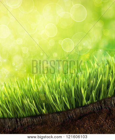 Fresh spring grass with dew drops against a blue sky
