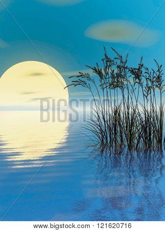Water plants at sunset - digital artwork