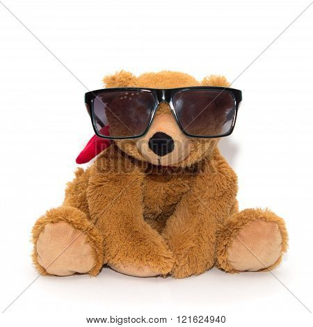 Cool teddy bear in sunglasses isolated