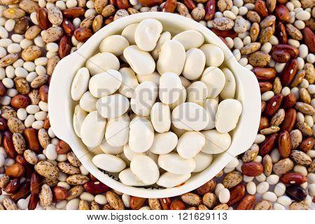 Beans White Color In A White Mini Pot