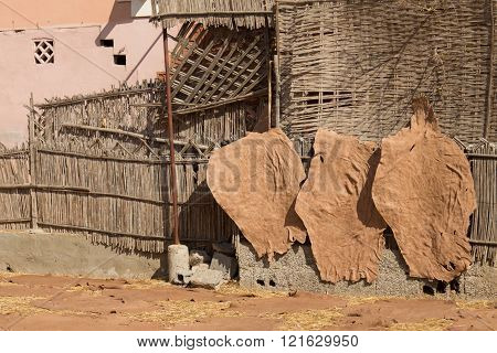 hides being dried in a tannery in Taraodant, Morocco