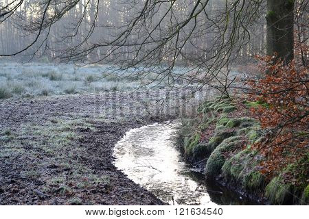 Small river in the forest