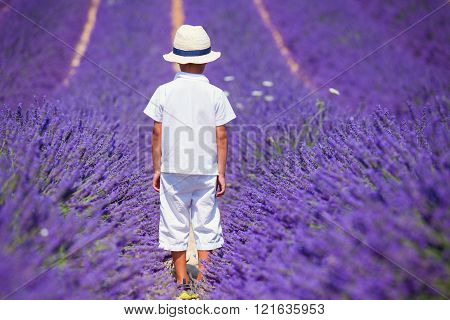 Cute boy in the lavander fields