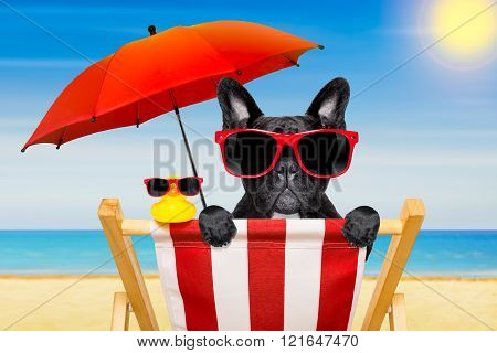 Dog Beach Chair In Summer