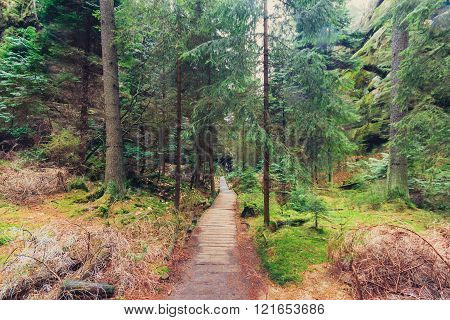 wooden hiking path through forest landscape