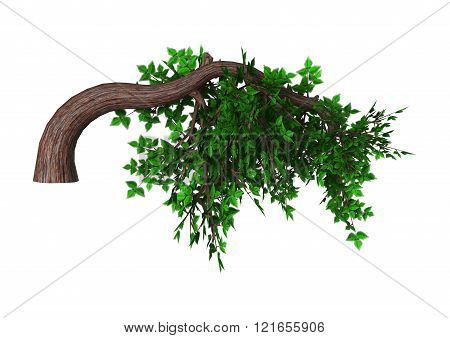 Digital render of a green bonsai tree isolated on white background, Kengai style or cascade bonsai