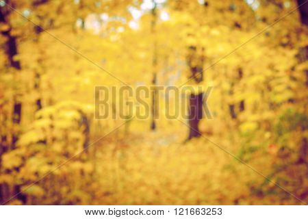 Autumn forest and yellow leaf blurred background horizontal