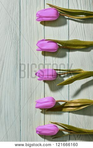 Mothers Day background.Tulips purple on blue wood