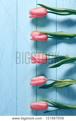 Mothers Day background.Tulips pink on blue wood