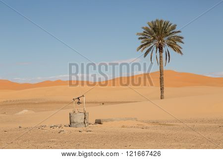 palm tree and well in the sand dunes of Merzouga, Morocco