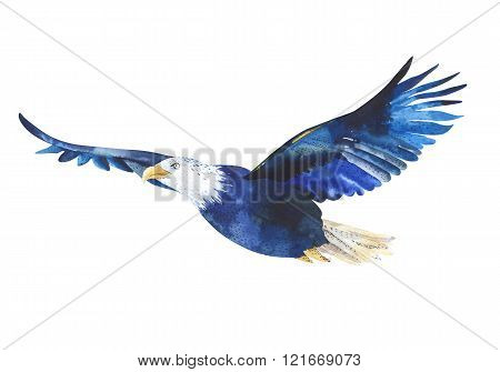 Watercolor isolated illustration of a bird eagle in white background. Bird flying in the sky. natural Design illustration for watercolor prints.