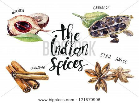 Set Of Spice, Drawing By Watercolor, Hand Drawn Illustration