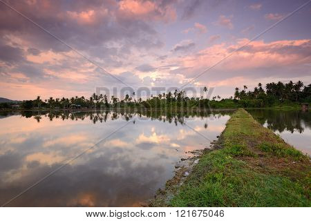 Colourful cloud reflection in rice field during dawn