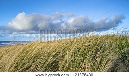 View On The Beach From The Sand Dunes