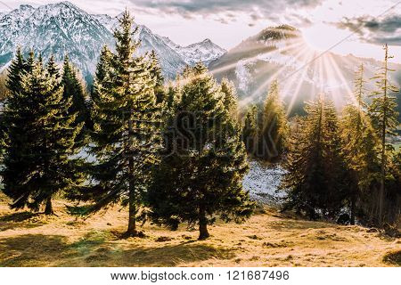 forest mountain sunset at allgaeu bavaria autumn