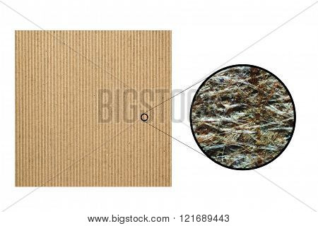 Recycled Cardboard Seen With Microscope