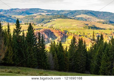 pine trees near valley in mountains  on hillside