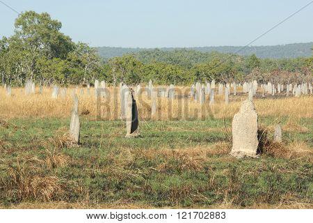 Magnetic termite mound, Litchfield National Park, Australia