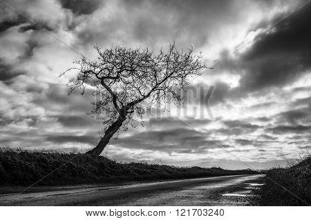 One Tree Road