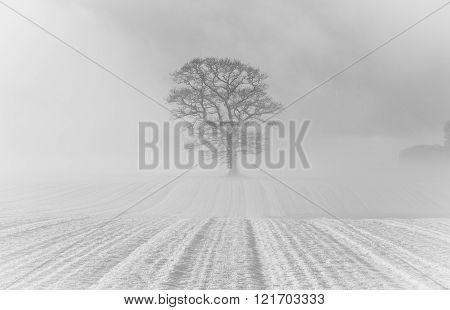 Mist And Snow