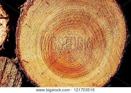 Cut of long-tailed timber. Close up shot.