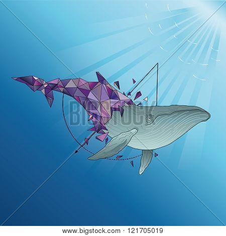 Polygonal Humpback whale