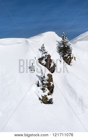 Three trees on three rocks on top of a snowy mountain in the Austrian Alps