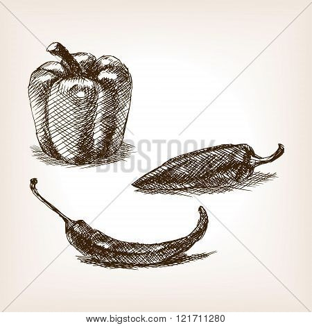 Peppers hand drawn sketch style vector