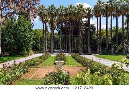 Palm garden in center of Athens, Greece