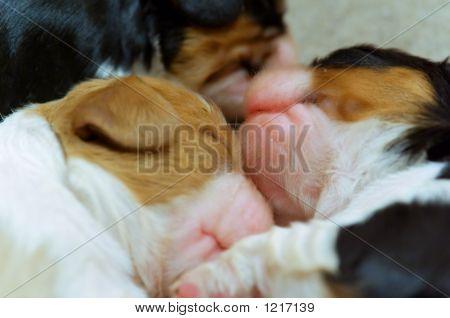 Nice Puppies