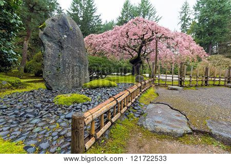 Cherry Blossom Tree in bloom by natural landscaping rock at Japanese Garden in Spring Season